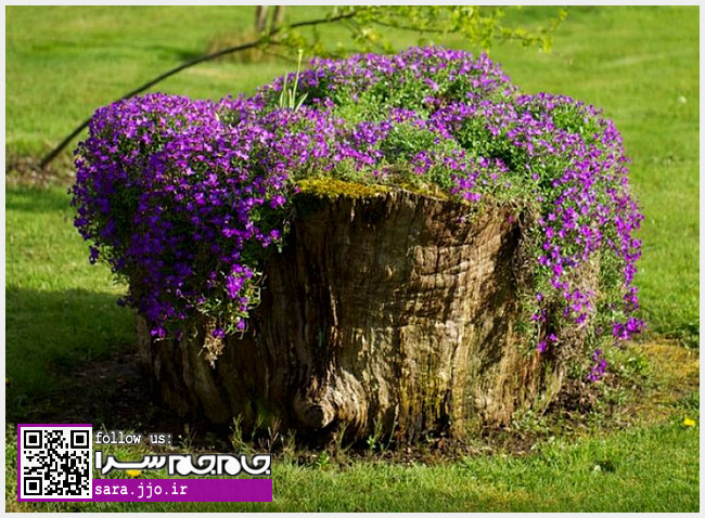 تبدیل درختان قدیمی به گلدانهای زیبای گل و گیاه [عکس]