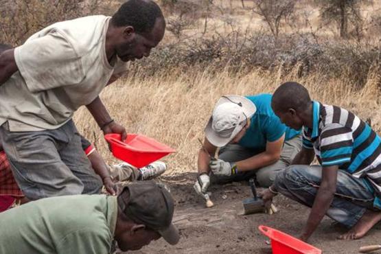 گوریل جفتگیری جام جم آنلاین - کشف رد پاهای چند میلیون ساله اجداد انسان +عکس
