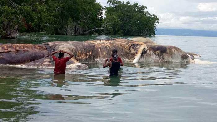 کشف موجود عظیم الجثه در اندونزی +تصاویر