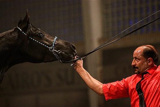 قیمت جهانی اسب