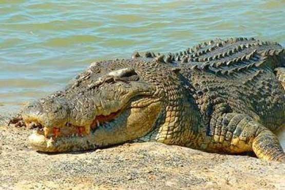 کدام حیوان چشم باز میخوابد