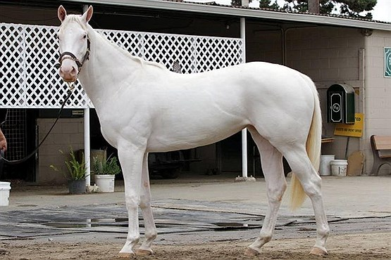 قیمت گرانترین اسب جهان