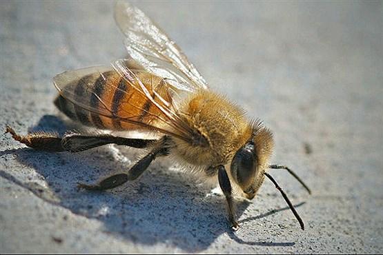 نیش عقرب نیش زهرآلود زنبور مارهای آناکوندا لوریس تنبل عکس حیوانات سم نیش هزارپا سم ساس زهر حلزون زنبور عسل دانستنی های علمی دانستنی های جالب دانستنی ها خطرناکترین مار خطرناکترین زنبور جهان خطرناکترین حیوان حیوانات عجیب دنیا حلزون مخروطی