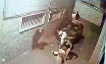 بازداشت زورگیران خشن در پایتخت