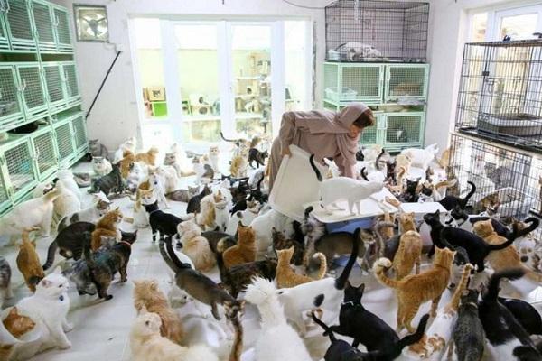 نگهداری از 500 سگ و گربه توسط یک زن! (+عکس)