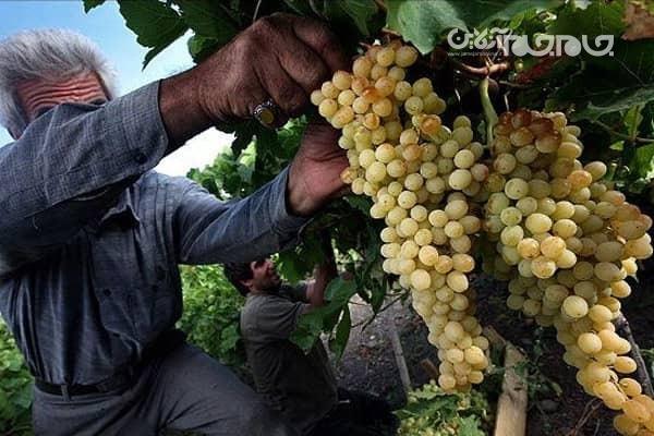 305889 520 - پایگاه خبری اخبار بناب شهرستان بناب