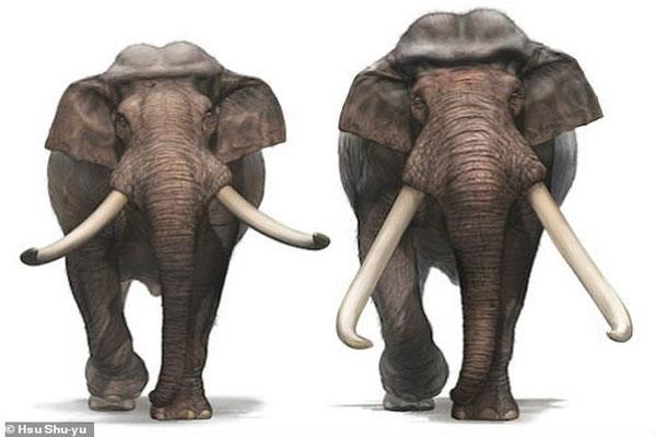 فیل های کوتوله (عکس)